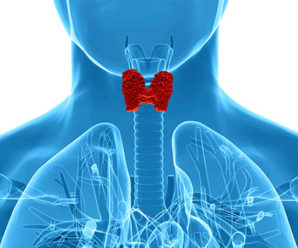 Things You Should Know About Thyroid Function Tests
