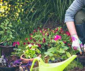 The Health Benefits of Owning a Garden